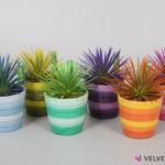 Agave Velvet Touchz® mix