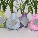 Nolina No Water Plants® Monet